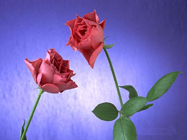 زهور (1)