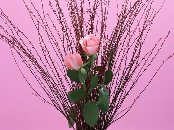 زهور (2)
