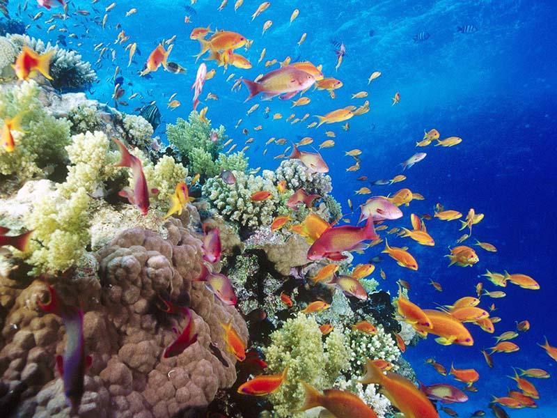 صور اماكن سياحة في مصر وجمال مصر (2)