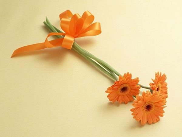 صور زهور برتقالي (1)