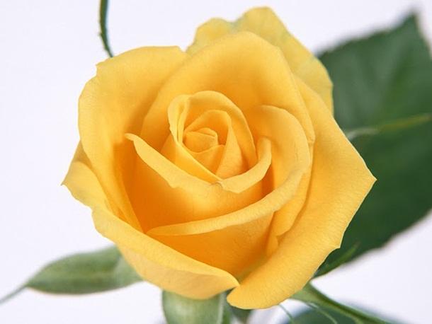 صور زهور برتقالي (3)