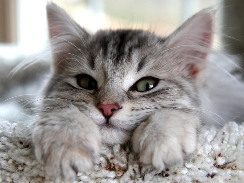 صور قطط ناعمة (1)