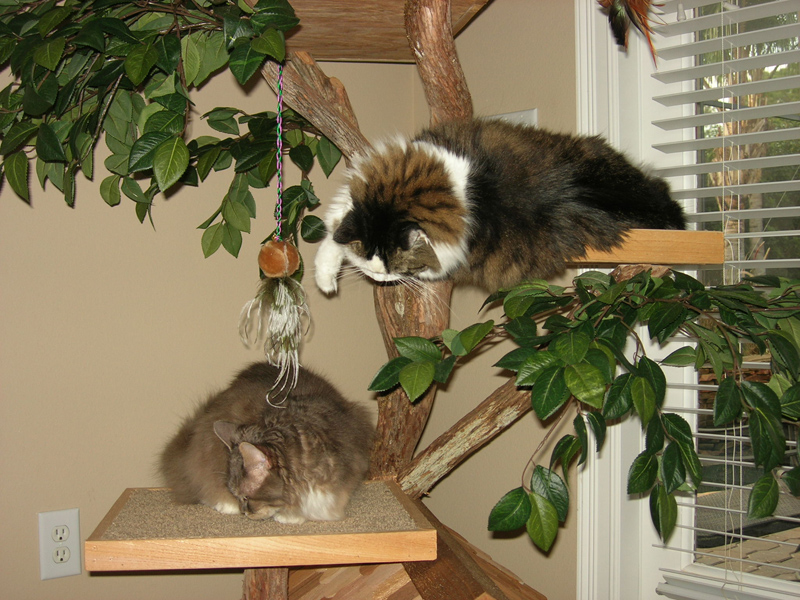 صور قطط ناعمة (2)