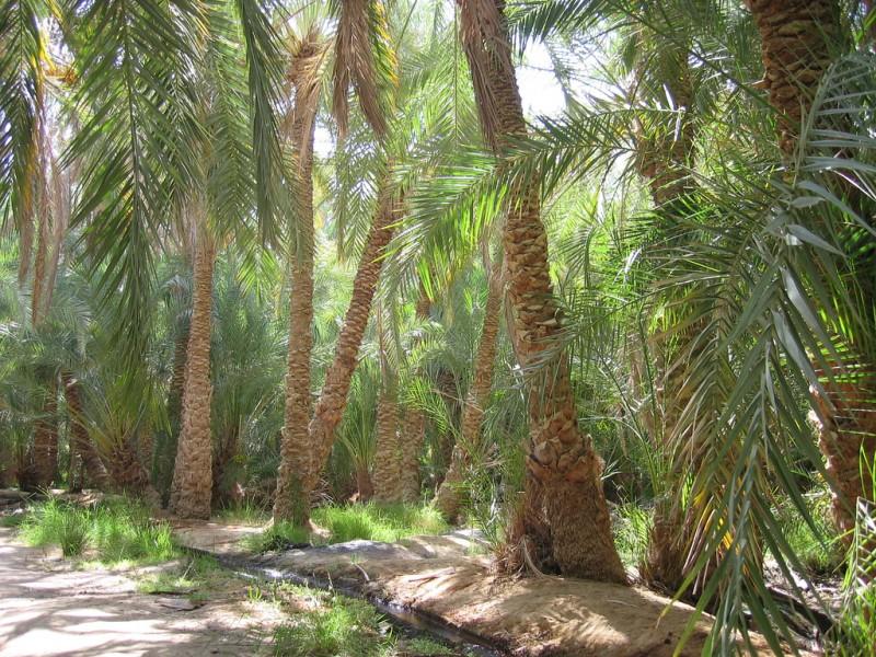 صور مصر جميلة (2)
