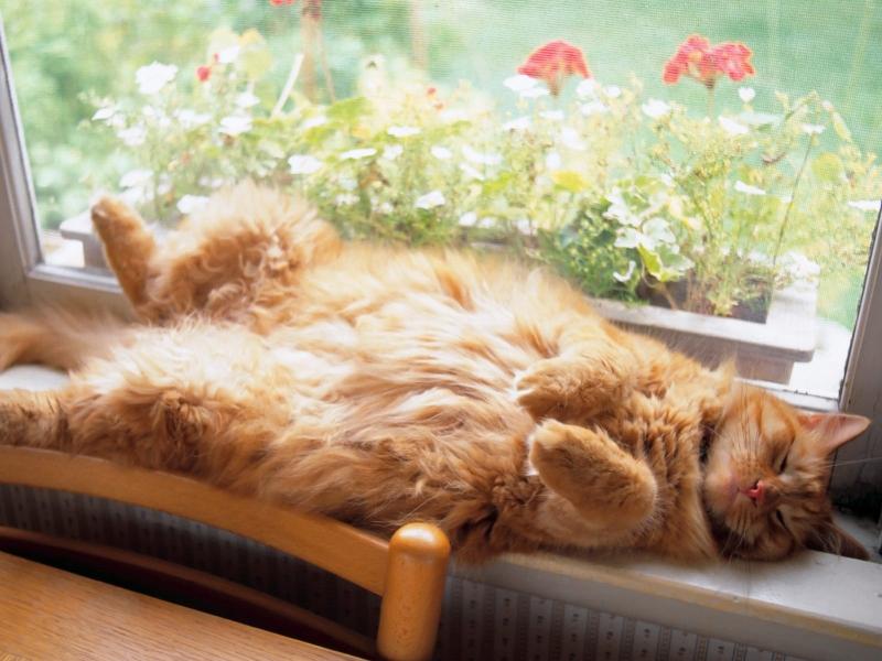 قطط ناعمة جدا (2)