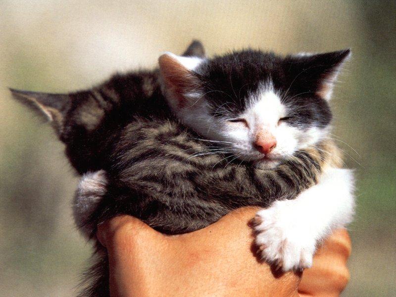 قطط ناعمة جدا (4)