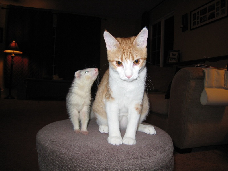 قطط (2)