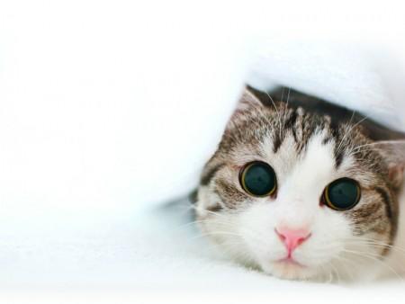 اجمل قطط 2016 (2)