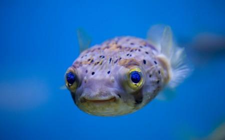 احلي سمك زينة (3)