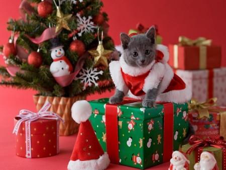 احلي قطط في العالم  (1)
