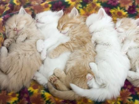 احلي قطط في العالم  (2)