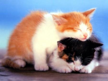 احلي قطط في العالم  (4)