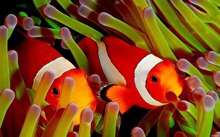 اشكال سمك زينة (2)