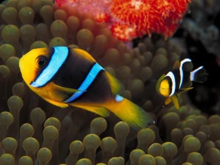 اشكال سمك زينة (5)