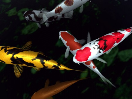 اشكال سمك (1)