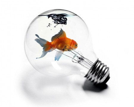 اشكال سمك (2)