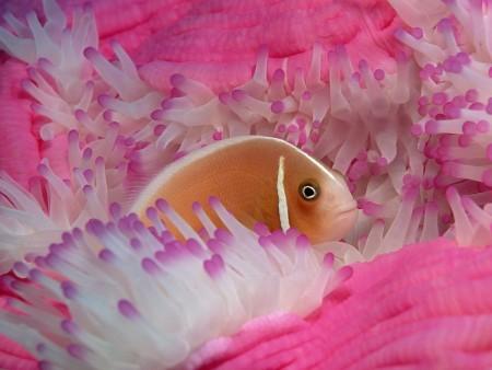 خلفيات سمك زينة (1)