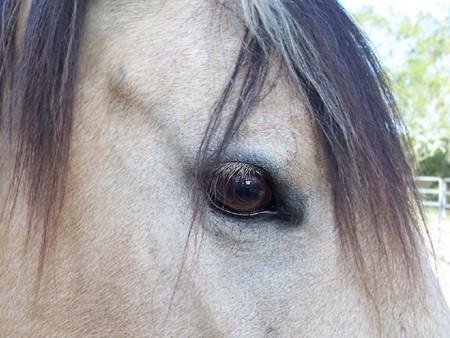 خيول عربية اصيلة (2)