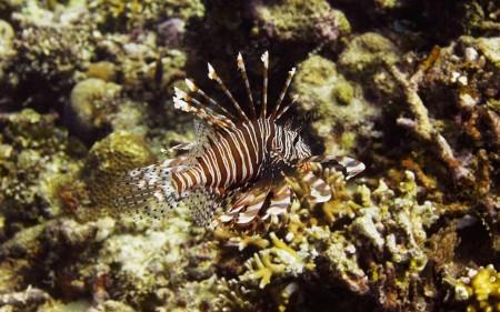 سمك زينة جميل بالصور احلي واجمل اسماك زينة (2)