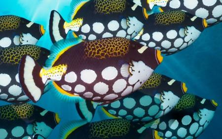 سمك (1)