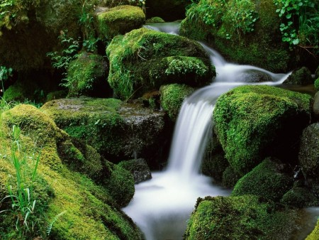 شلالات خضراء (1)