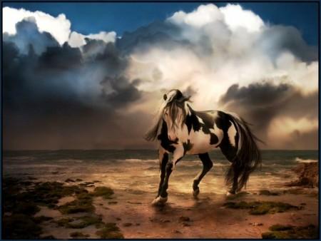 صور احصنة ملونة (1)