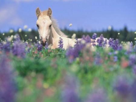 صور احصنة وفرس عربي اصيل بالوان جميلة (6)