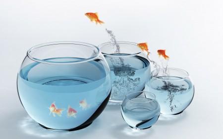 صور سمك جديدة (2)