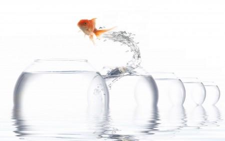 صور سمك جديدة (3)