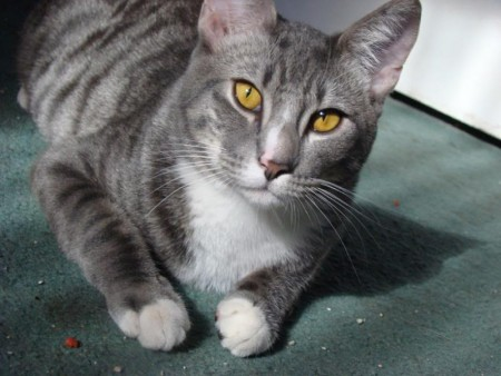 صور قطط حلوه  (3)