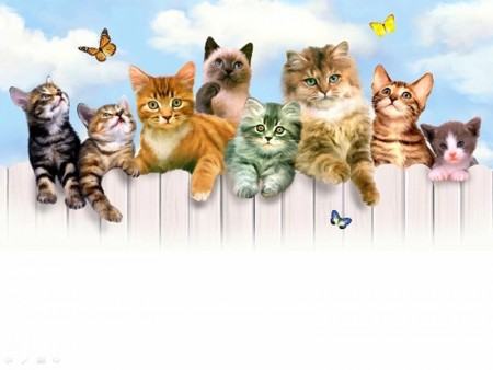 قطط حلوة (2)