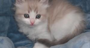 قطط روعة (2)