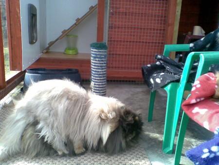 قطط روعة  (3)