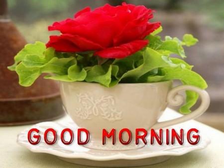 صور صباح جميلة (2)