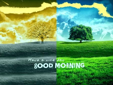 صور صباح (1)