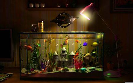 الوان سمك (1)