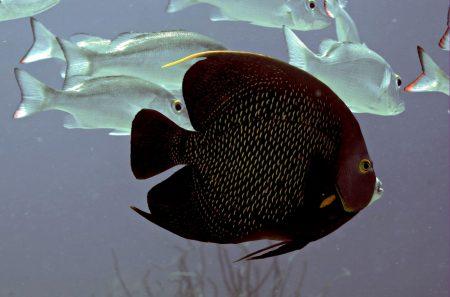 الوان سمك (2)