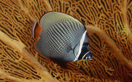 خلفيات واشكال سمك زينة HD (3)