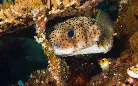 صور اسماك ملونة خلفيات وصور سمك بجودة HD (1)