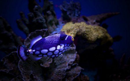 صور اسماك ملونة خلفيات وصور سمك بجودة HD (3)