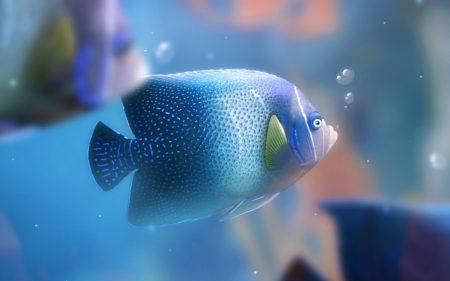 صور اسماك ملونة خلفيات وصور سمك بجودة HD (4)