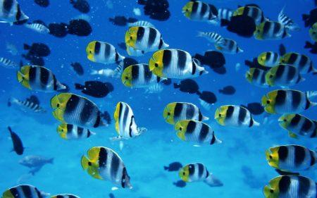 صور اسماك ملونة خلفيات وصور سمك بجودة HD (5)