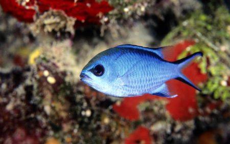 صور سمك زينة ملون (1)