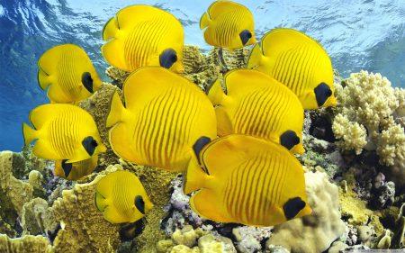صور سمك زينة ملون (3)