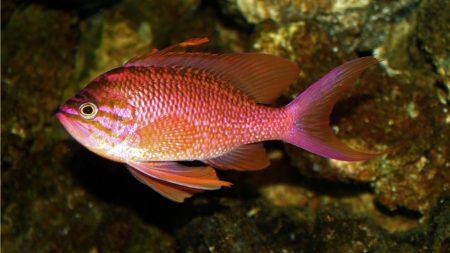 صور سمك زينة ملون (4)