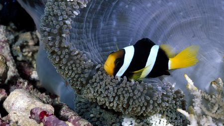صور سمك زينة  (2)