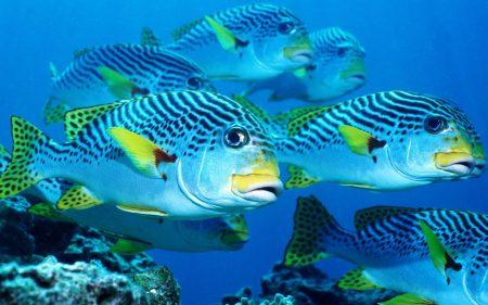 صور سمك زينة  (4)