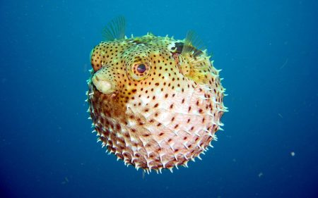 صور سمك نادر (4)