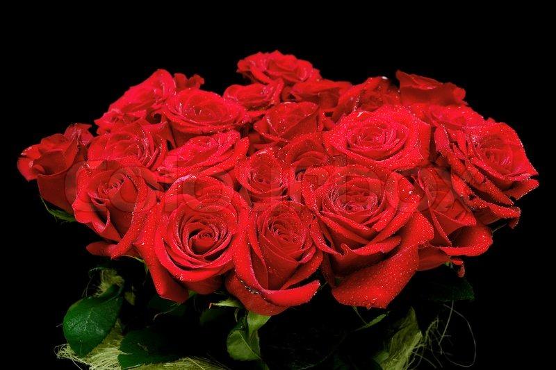 ورد احمر بالصور (4)