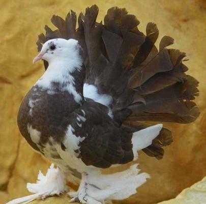 طيور الحمام بالصور (2)